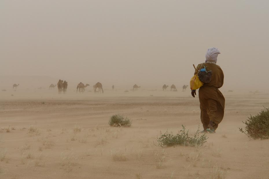 kamelhirte_mauretanien.jpg